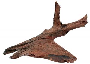 Racine de mangrove - Taille L - 40/60 cm
