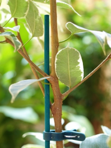 Tuteurs splits bambou x25 - Nortene - 60 cm