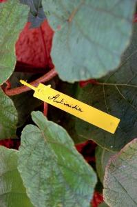 Étiquettes à suspendre + feutre Tree Label - Nortene - x40