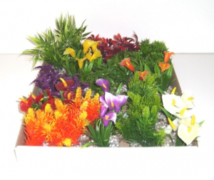 Minis plantes feuillages et coloris variés - Labéo