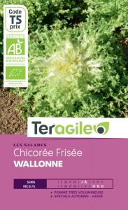 Chicorée frisée walonne bio - 2.5g - Teragile