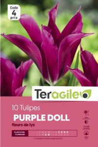 Tulipe Purple Doll - Calibre 12/+ - X10