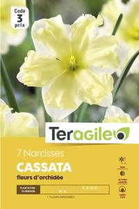 Narcisse Cassata - Calibre 14/16 - X7