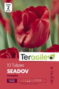 Tulipe Seadov - Calibre 12/+ - X10