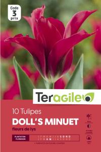 Tulipe Doll's Minuet - Calibre 12/+ - X10
