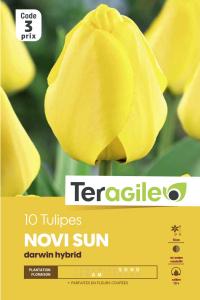 Tulipe triomphe Novi Sun - Calibre 12/+- X10