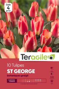 Tulipe Saint George - Calibre 12/+ - X10