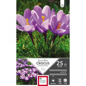 Crocus Grande Fleur Grand Maitre - Calibre 8/9 - X25