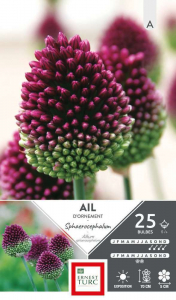 Allium Moyen Sphaerocephalum - Calibre 5/+ - X25