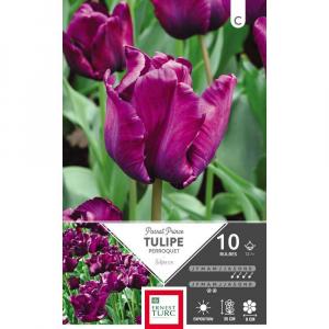 Tulipe Perroquet Parrot Prince - Calibre 12/+ - X10
