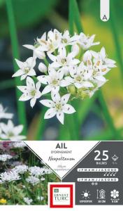 Allium Court Neapolitanum - Calibre 5/+- X25