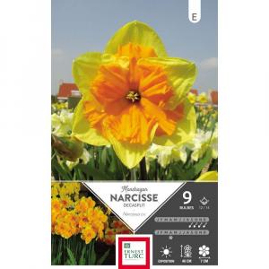 Narcisse Decasplit Mondragon - Calibre 12/14 - X9