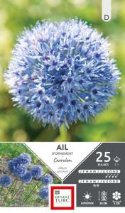 Allium Court Caerulum - Calibre 4/+ - X25
