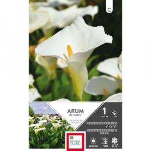 Arum D'Ethiopie - Calibre 14/+ - X1