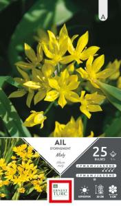 Allium Court Moly - Calibre 5/+ - X25