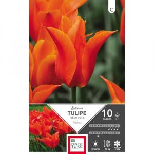 Tulipe Fleur De Lis Ballerina - Calibre12/+ - X10