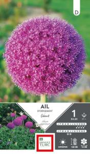 Allium Haut Giganteum - Calibre 20/+ - X1