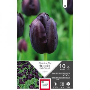 Tulipe Simple Tardive Reine De La Nuit - Calibre 12/+ - X10