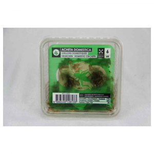 Boîte grillons domestiques moyens - Stoffels - x60