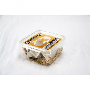 Boîte criquets adultes - Stoffels - x10