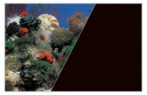 Poster fond décor découpé Corail/noir 120 x 60 cm - Zolux