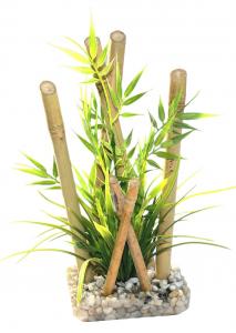 Bambou large plante