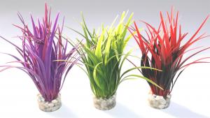 Plante papyrus medium