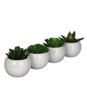 Plante succulente artificielle en pot
