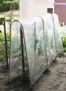 Film de protection Tomato - Nortene - 3x3,5 m