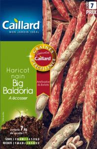 Haricot nain à écosser Big Baldoria - Graines - Caillard