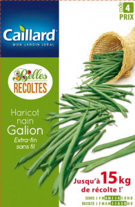 Haricot nain extra-fin sans fil Galion - Graines - Caillard