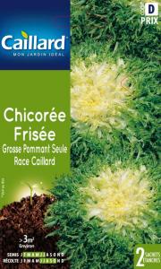 Chicorée frisée grosse pommant - Graines - Caillard