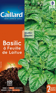 Basilic a feuille de laitue - Caillard