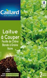 Laitue couper feuilles de chêne blonde - Caillard