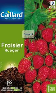 Fraisier ruegen - Graines - Caillard