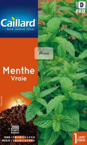 Menthe vraie - Graines - Caillard