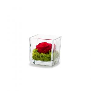 Rose stabilisée dans verrerie Genova - 8x8x8