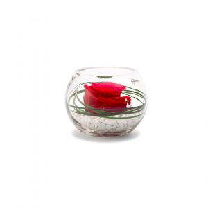 Rose stabilisée dans verrerie Venezia - Diamètre 11 cm