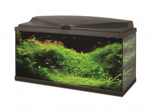 Aquarium 80 LED équipé - Ciano