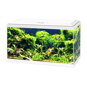 Aquarium 60 LED équipé - Ciano - Blanc