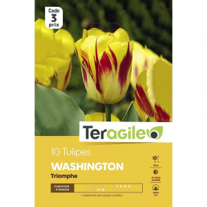 Tulipe washington - Calibre 10/11 - X10
