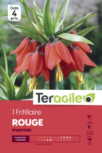Fritillaire imperial rouge - Calibre 20/+ - X1