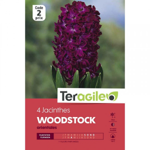Jacinthe woodstock - Calibre 14/15 - X4