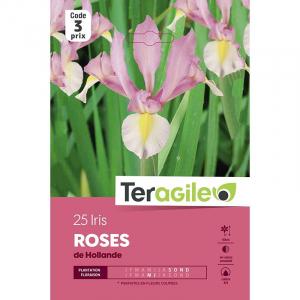 Iris de hollande rose - Calibre 7/8 - X25