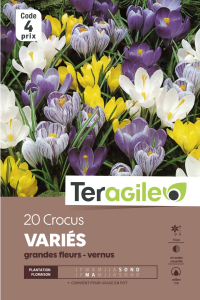 Crocus grandes fleurs - Variés - Calibre 7/8 - X20