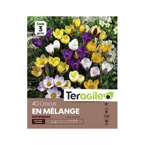 Crocus botanique - Variés - Calibre 6/7- X40