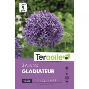 Allium gladiateur - Calibre 20/+ - X3