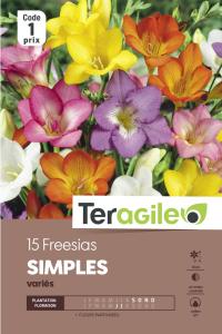 Freesia simple - Variés - Calibre 6/7 -X15