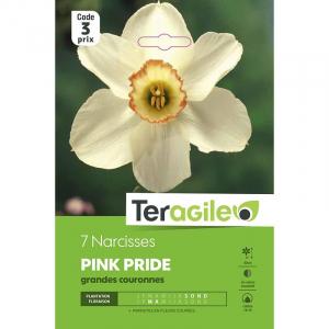 Narcisse pink pride - Calibre 14/16 - X7