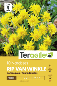 Narcisse rip van winkle - Calibre 10/12- X10